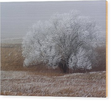 Frost And Fog Wood Print by Alana Thrower