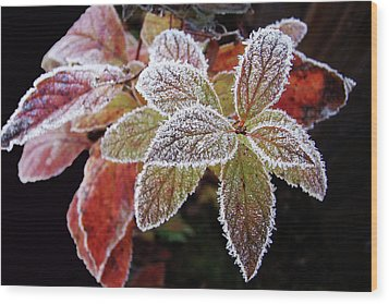 Frost Cluster Wood Print by Betsy Zimmerli