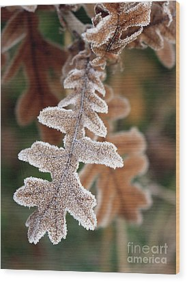 Frost Covered Oak Leaf Wood Print