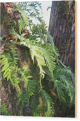 Frost On Ferns Wood Print by Ken Day