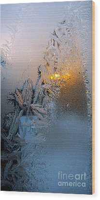 Frost Warning Wood Print by Pamela Clements