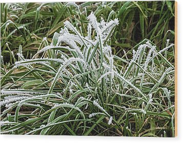 Frosted Grass Wood Print
