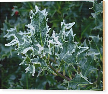Frosted Holly Wood Print by Shirley Heyn