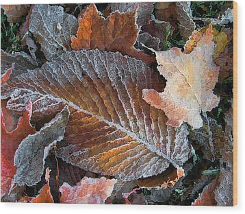 Wood Print featuring the photograph Frosted Painted Leaves by Shari Jardina
