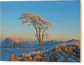 Frosted Tree Wood Print by Mark Denham