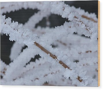 Wood Print featuring the photograph Frosted Twigs by DeeLon Merritt