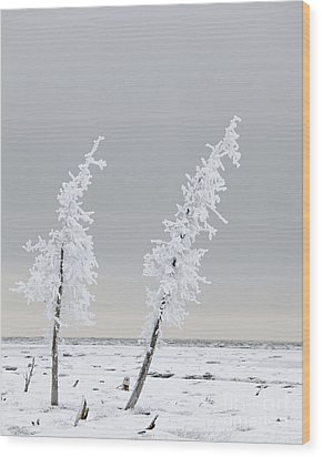 Frosted Twins Wood Print by Tim Grams