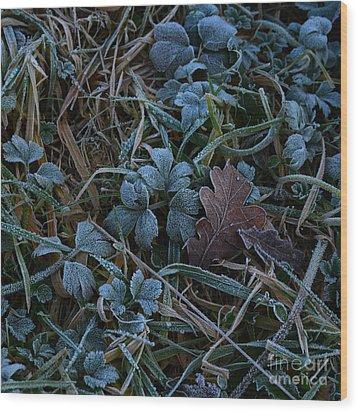Frostings 4 Wood Print