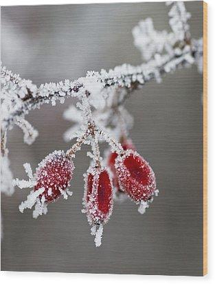 Frosty Garden Wood Print by Frank Tschakert