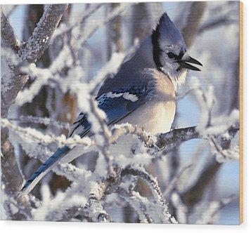 Frosty Morning Blue Jay Wood Print