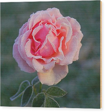 Frosty Rose Wood Print by Monica Lewis