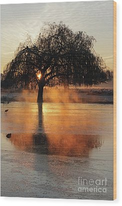 Frosty Sunrise In Bushy Park London 2 Wood Print