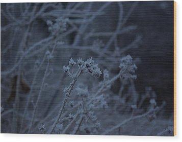 Frozen Buds Wood Print