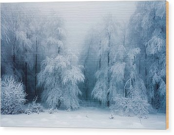 Frozen Forest Wood Print by Evgeni Dinev