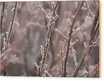 Wood Print featuring the photograph Frozen Garden by Ana V Ramirez
