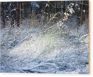 Frozen Grass Wood Print by Svetlana Sewell