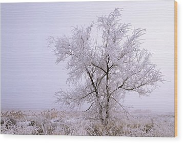 Frozen Ground Wood Print by Chad Dutson