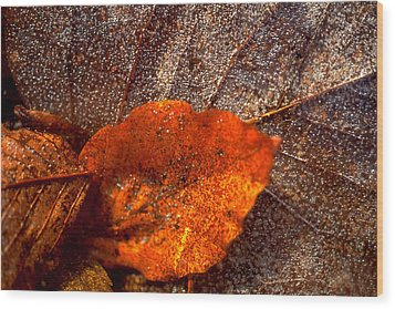 Frozen Leaf Wood Print by Michael Mogensen