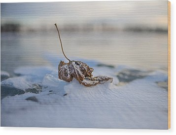 Frozen Leaf On Lake Reno Wood Print