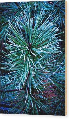 Frozen Pine Needles  Wood Print