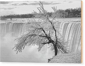 Frozen Tree Near Niagara Falls Wood Print