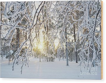 Frozen Trees Wood Print by Delphimages Photo Creations