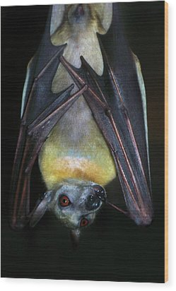 Wood Print featuring the photograph Fruit Bat by Anthony Jones