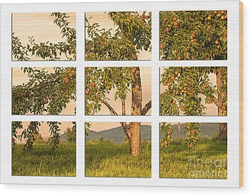 Fruit In The Orchard Through The Window Pane Wood Print