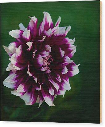 Fuffled Petals Wood Print by Cherie Duran