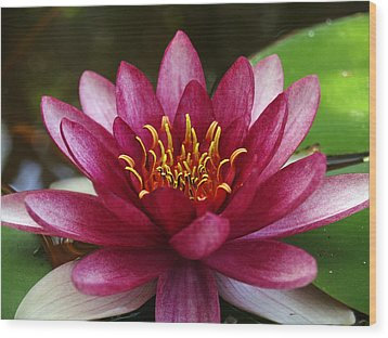 Full Lotus Wood Print by James Granberry