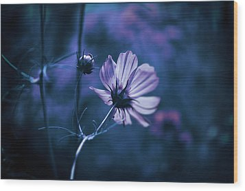 Wood Print featuring the photograph Full Moon Cosmos by Douglas MooreZart