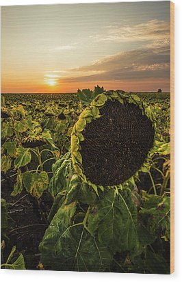 Wood Print featuring the photograph Full Of Seed  by Aaron J Groen