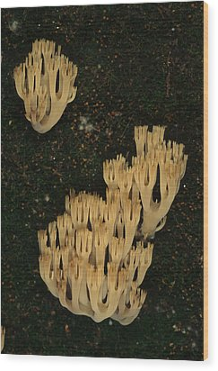 Fungi Grows Out Of A Fallen Log In An Wood Print by Michael S. Quinton