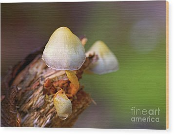Wood Print featuring the photograph Fungi On A Stump by Sharon Talson