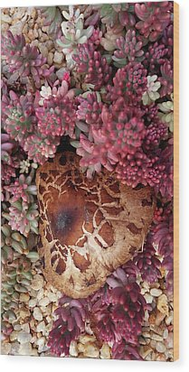 Fungus And Succulents Wood Print