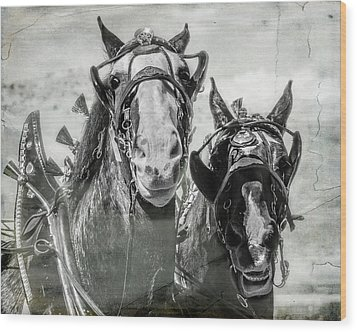 Wood Print featuring the photograph Funny Draft Horses by Mary Hone