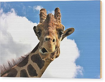 Funny Face Giraffe Wood Print by Sheila Brown