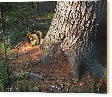 Furry Neighbor Wood Print by Paul Sachtleben