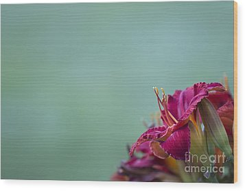 Wood Print featuring the photograph Fuchsia In Bloom by Andrea Silies