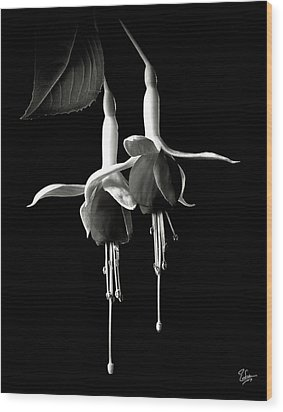 Fuschias In Black And White Wood Print