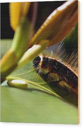 Future Butterfly Wood Print by Alexandra Harrell