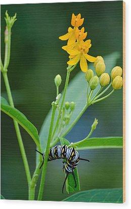 Future Monarch Wood Print