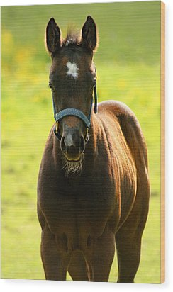 Wood Print featuring the photograph Fuzzy Colt by Angela Rath