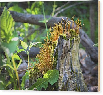 Wood Print featuring the photograph Fuzzy Stump by Bill Pevlor