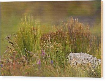Fynbos Reeds Wood Print by Basie Van Zyl