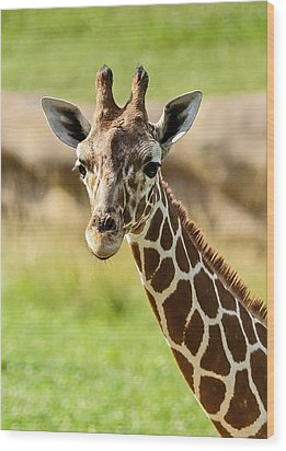 G Is For Giraffe Wood Print by John Haldane
