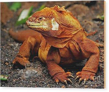 Galapagos Iguana Wood Print