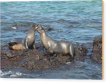 Galapagos Sea Lion Wood Print by Alan Lenk