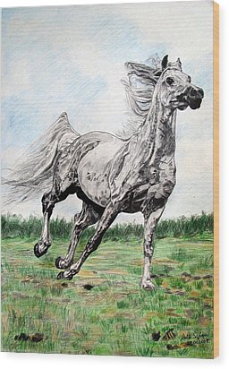 Galloping Arab Horse Wood Print by Melita Safran