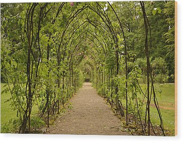 Garden Archway Wood Print by Martina Fagan